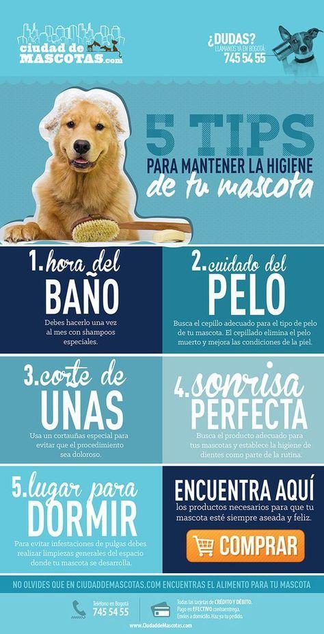 Recuerda que debes cuidar el pelo, dientes, uñas y sueño de tu perro para mantenerlo saludable y feliz.