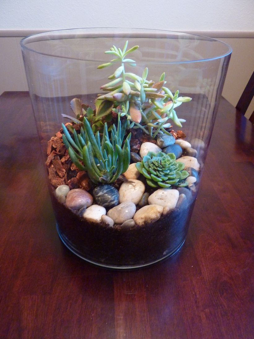 Succulent Terrarium Pinterest Challenge In Which A Tiny Plastic
