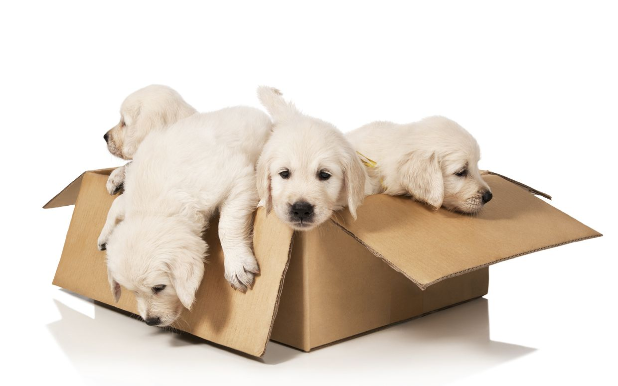 7 Tips For Moving With Your Pets Pet Relocation Dog Friends