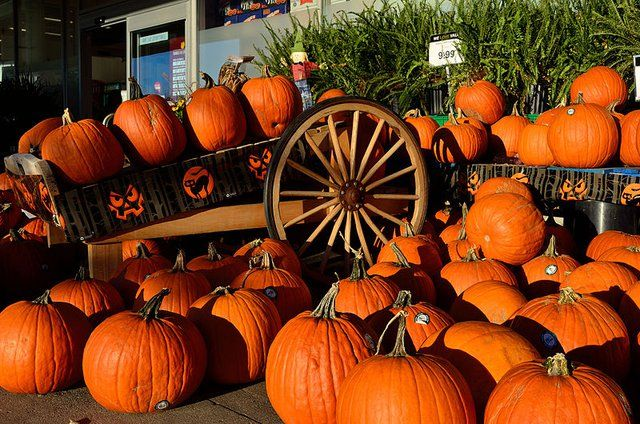 10 Family-Friendly Ways to Celebrate Halloween in St Louis - St - natural halloween decorations