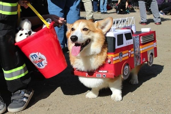 Fire Truck Dog Pet Halloween Costumes Dog Halloween Costumes