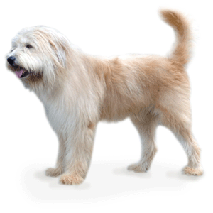 Must see Korea Chubby Adorable Dog - e46d5dca32a5803b12e5819b1e88b731  2018_885586  .png