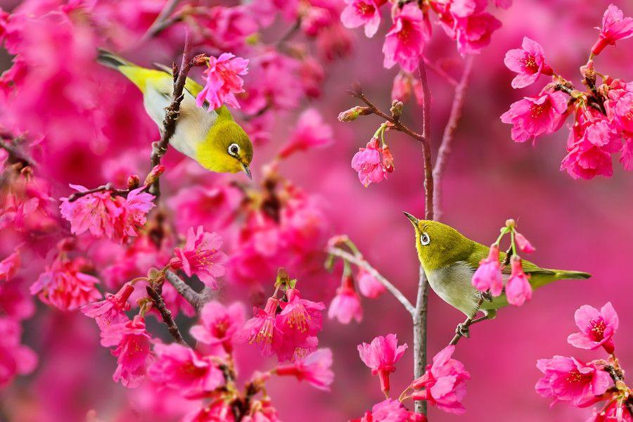 Photo Spring Melody by Sue Hsu on 500px
