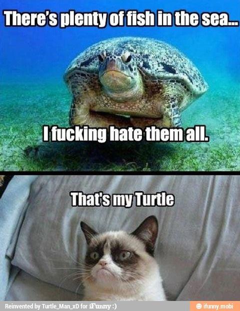 Grumpy Turtle / iFunny :)