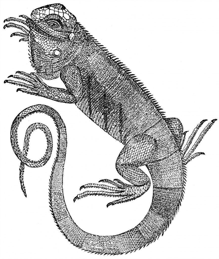 Free Iguana Clip Art The Graphics Fairy Graphics Fairy Clip Art Mixed Media Art Projects