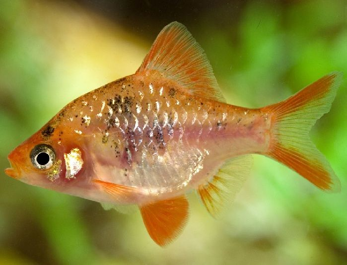 Pin On Exotic Colorful Fish