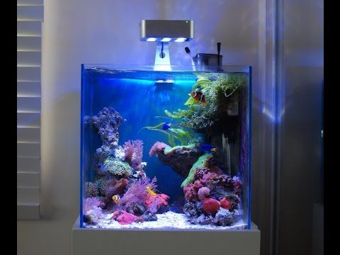 Aquascape Nano Mixed Soft Coral Reef Salt Tank Youtube Coral Aquarium Nano Reef Tank Cool Fish Tanks