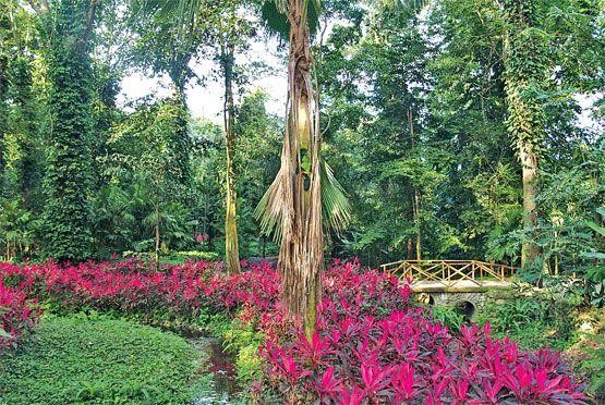 Parque de la flora ex tica tropical ubicado en san for Jardin botanico san felipe
