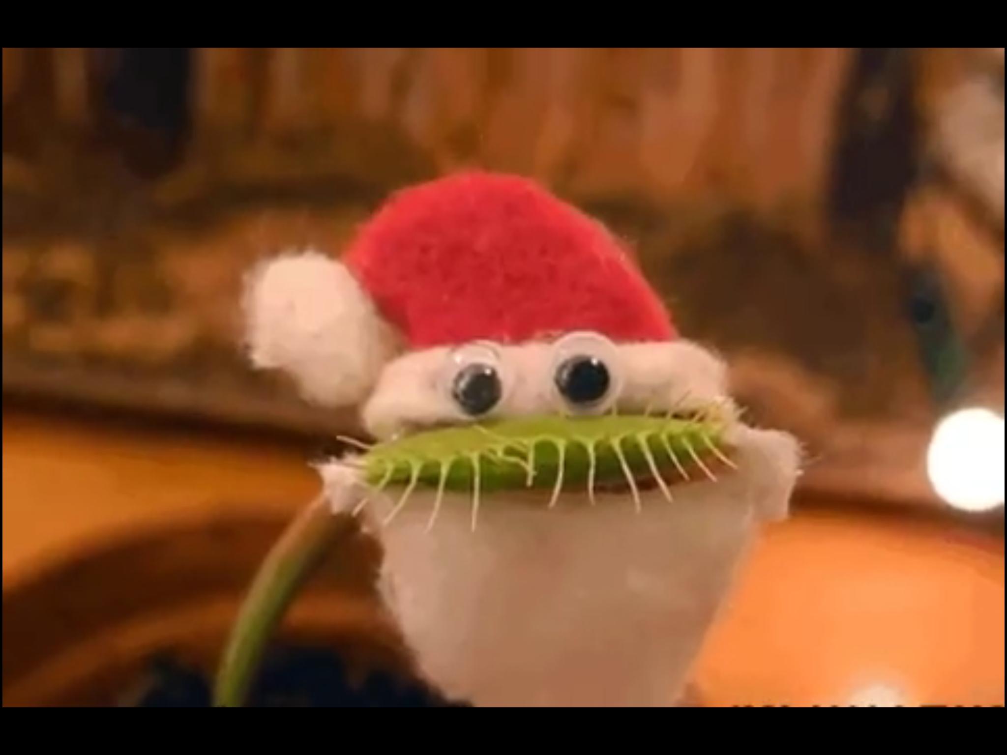 Santa Claus Made Out Of A Venus Flytrap Venus Fly Trap Venus Fly Traps