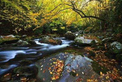 Download nature autumn river forest trees stones hdq - 10k wallpaper nature ...