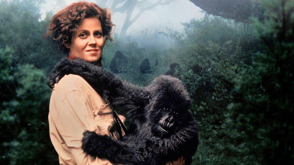 Gorilas en la niebla cumple 28 años #SigourneyWeaver