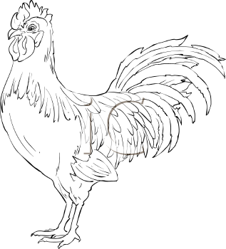 rooster drawings | Royalty Free Chicken Clipart | drawing ideas ...
