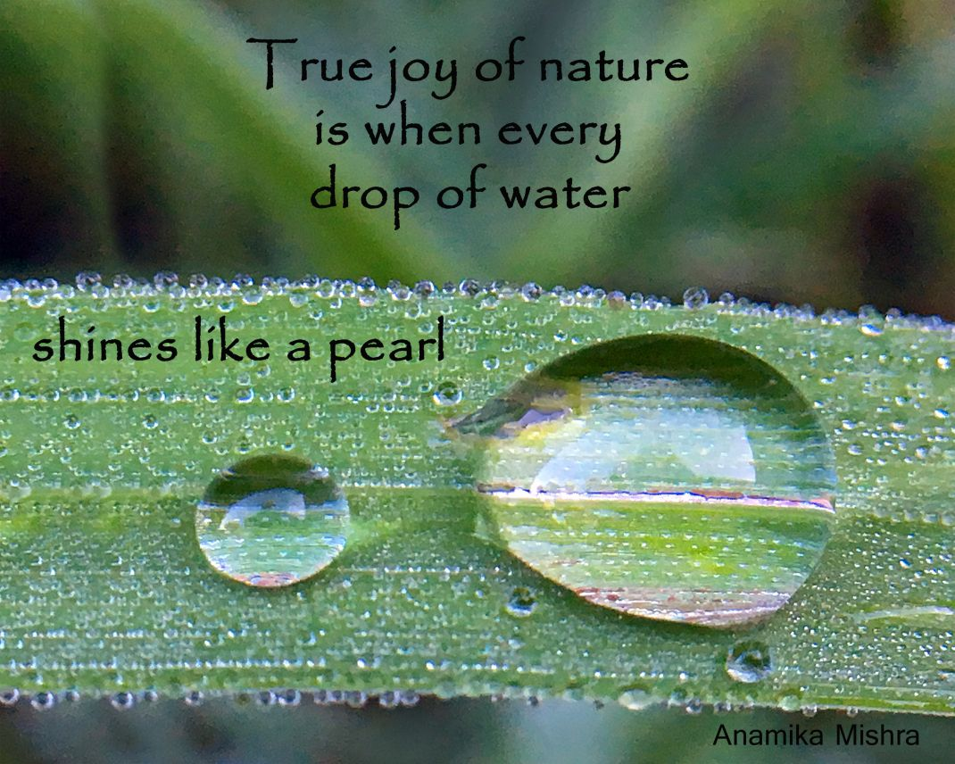 Nature Quote About A Drop Of Water Mother Nature Quotes Nature