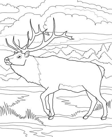 Reno de Woodland Dibujo para colorear | animales | Pinterest ...