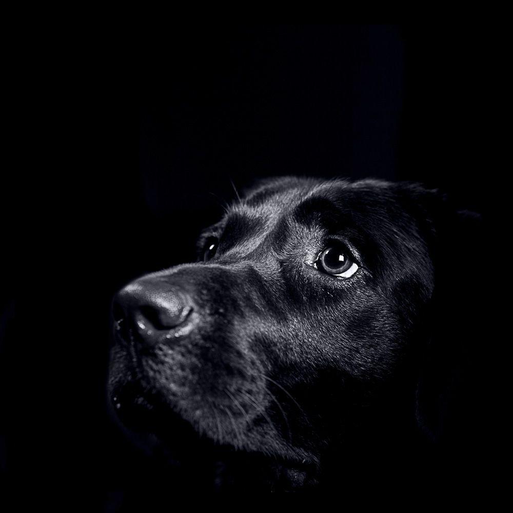 Zoo Studio Beautiful Animal Phtography Hundefotographien Pinterest Hunde Hunde Bilder Und Hundefotografie