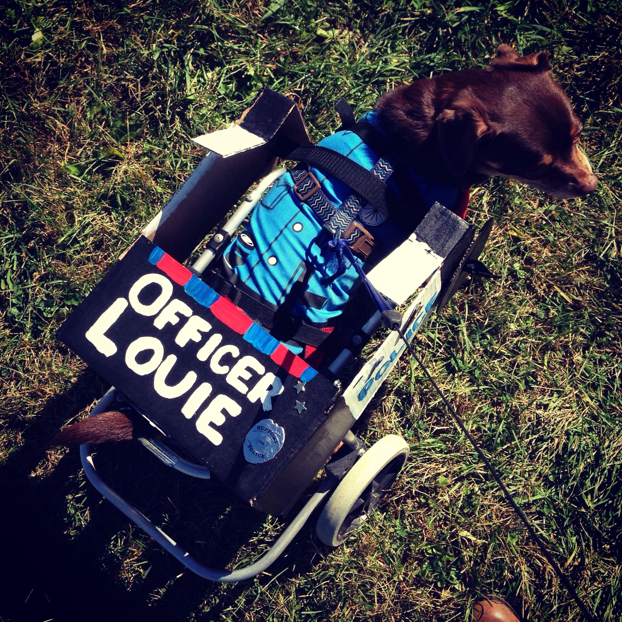 Louie Cazan the wheelchair dog in his police officer and