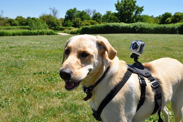 Dogs Hammel Woods Dog Park Gpk June 2016 061 Dogs Dog Park