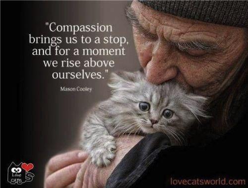 Compassion Zen Gardner Natalie Powersheets Pinterest