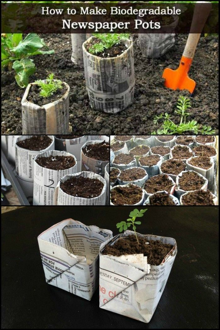 Yesterday S News Is Today S Biodegradable Seedling Pots 400 x 300