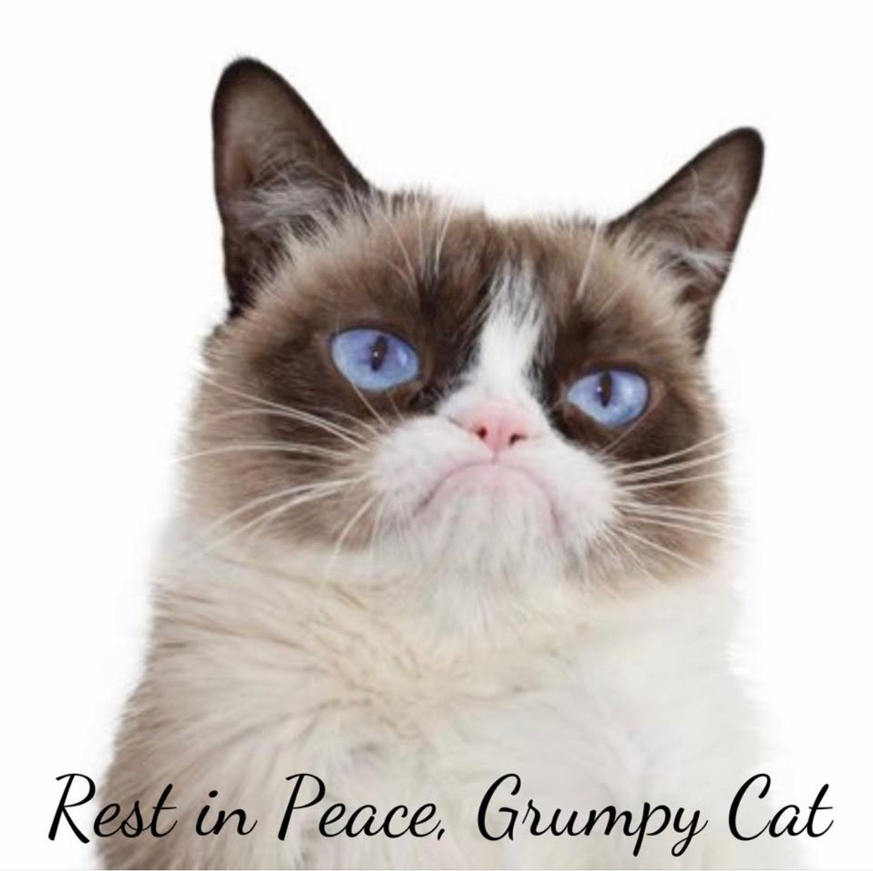 51419 Grumpy cat, Grumpy cat quotes, Cats