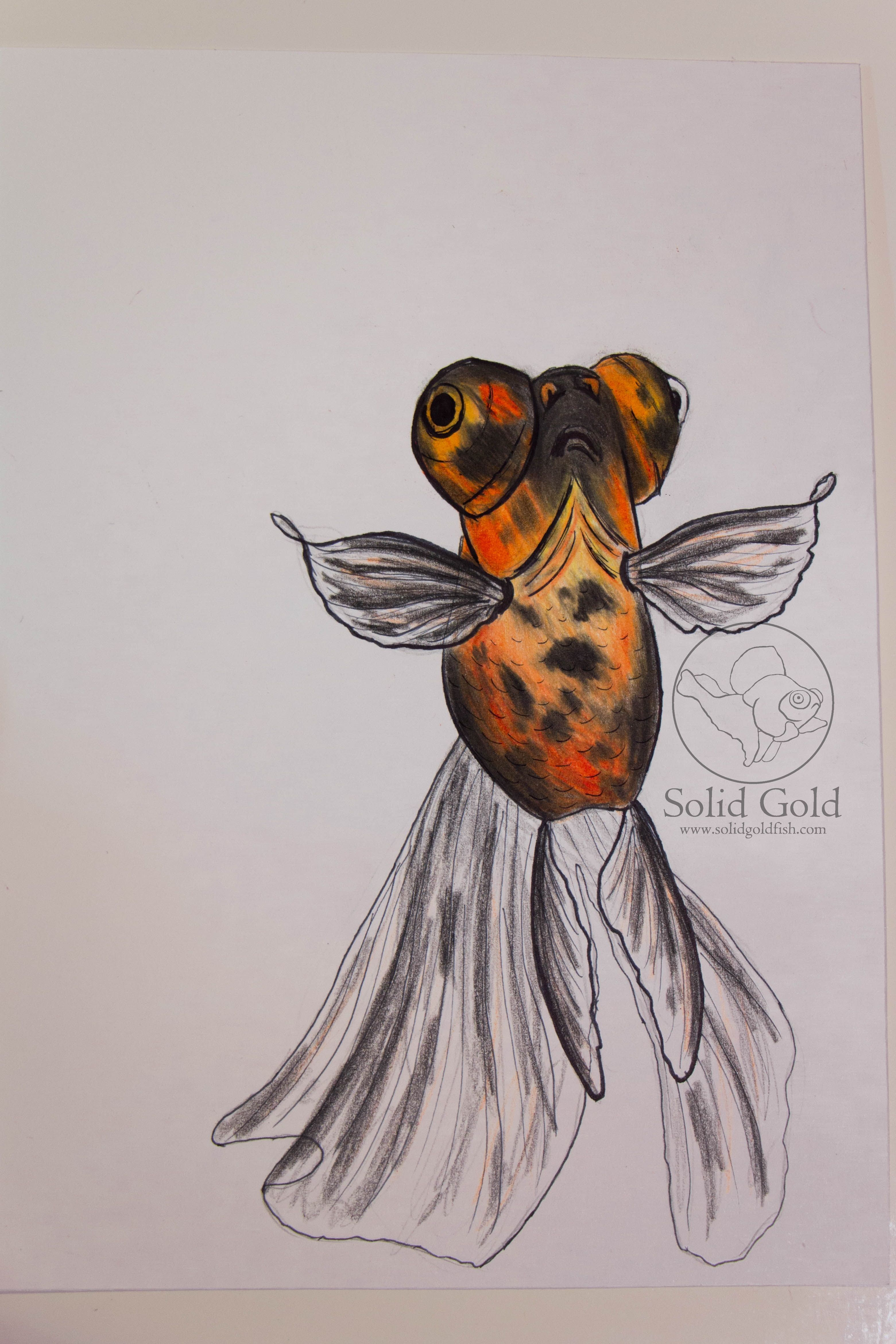 Red black butterfly telescope drawing by Jennie Connelly