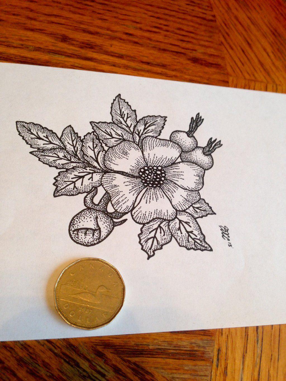Alberta Wild Rose by on DeviantArt