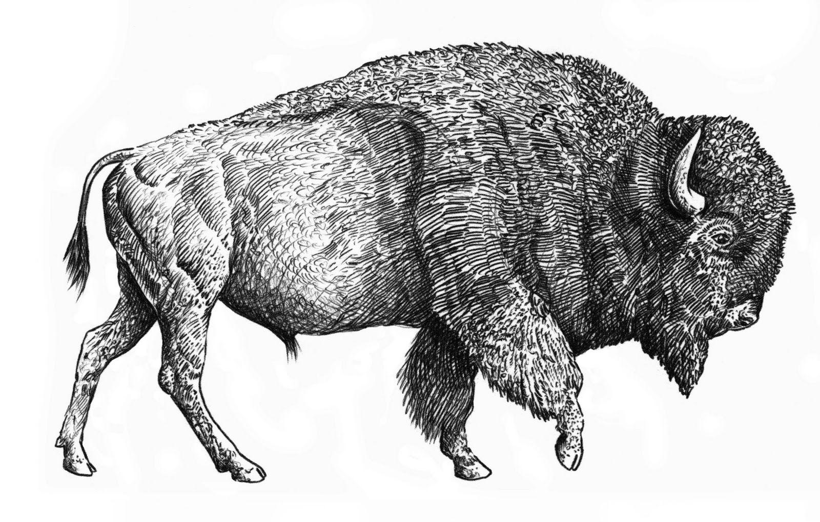 Картинки все животные мира отдельно масштабирования