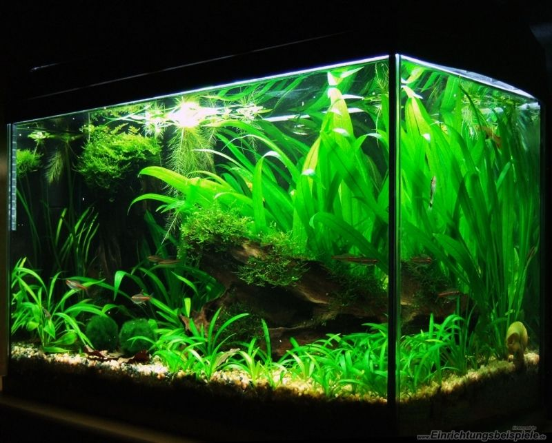 Ikea Grundtal Countertop Lighting ~ 1000+ ideas about Aquarium Becken on Pinterest  Garnelen Aquarium and