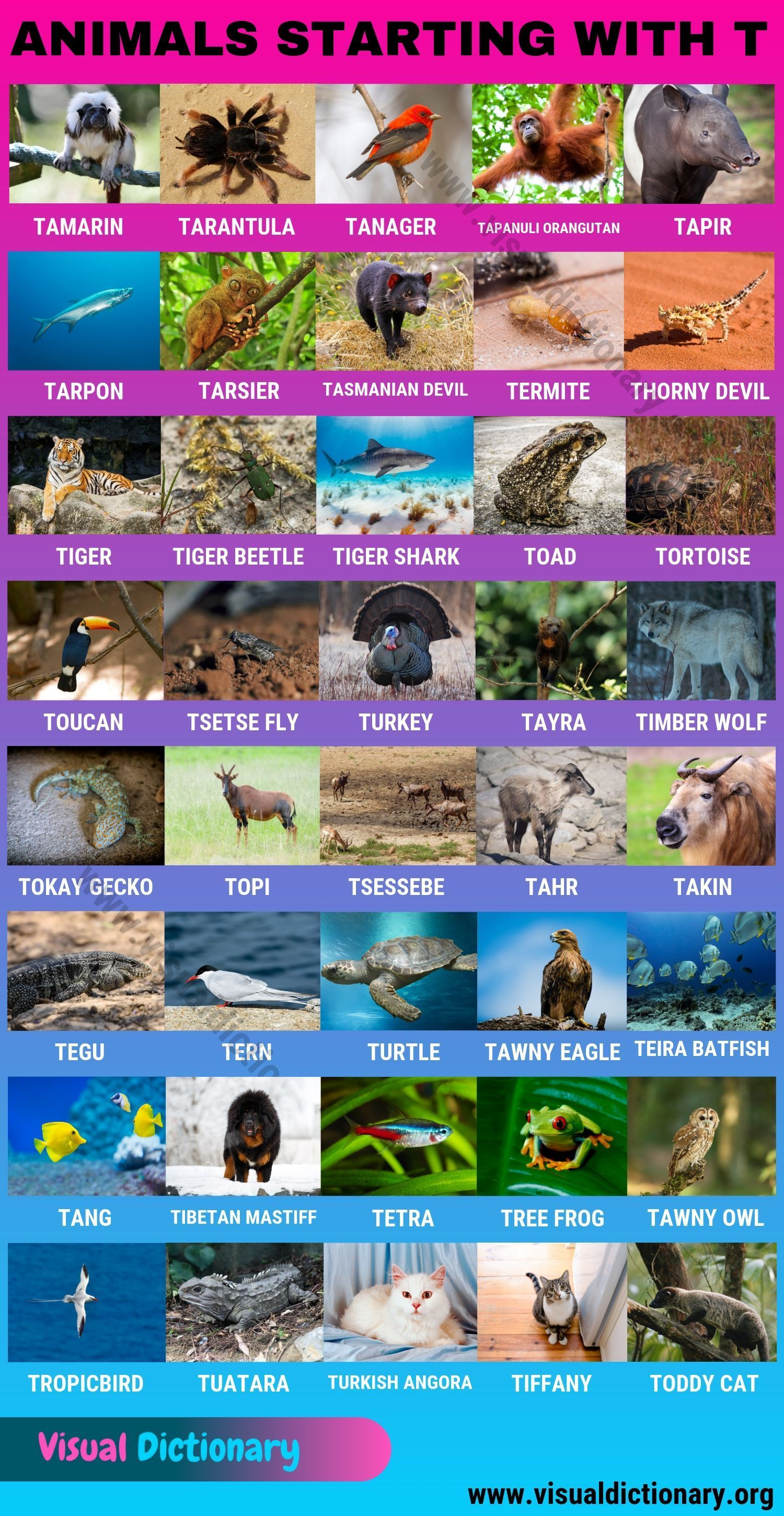 Animals That Start With T Useful List Of 40 Animals Starting With T Visual Dictionary Animals Starting With T Visual Dictionary Animals Name In English