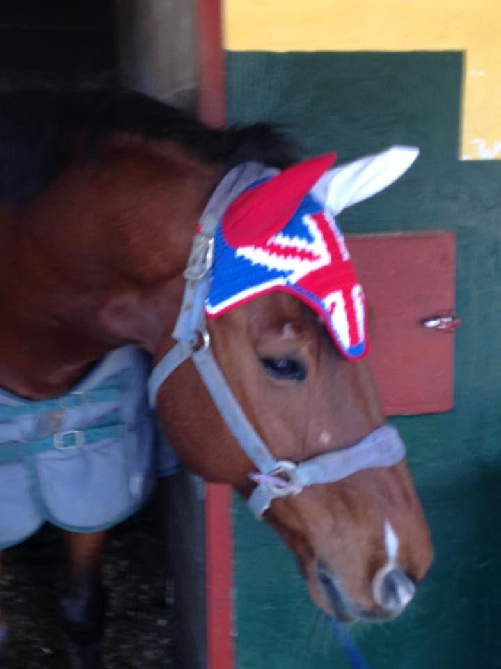 UK Style: base colore n. 59, colori bandiera rosso C19N e bianco, bordo n. 115, orecchie realizzate in cotone. In foto il piccolo Kla (Klaiton) Sella Italiano della nostra amica Chiara Pignero #flyveil #flybonnet #horse #pony #cuffiettecavallo #cavallo #equestrian #equestrianstyle #equinestyle #horsewear #earbonnet #earnet #horsefashion #horselover #jumper #UK