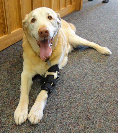 Elbow Braces For Dogs Dog Elbow Brace Front Leg Braces For