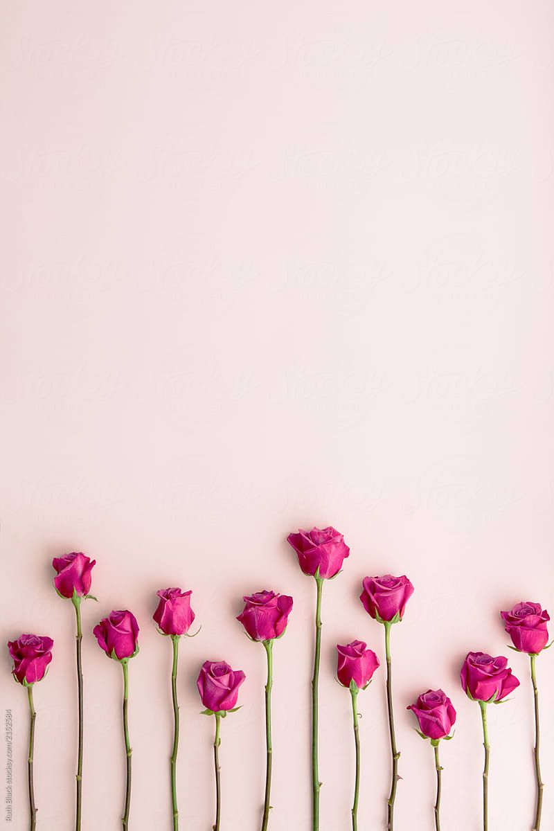 Long Stemmed Pink Roses On A Pink Background Download This High Resolution Stock Photo By Ru Pink Flowers Wallpaper Pink Wallpaper Iphone Pink Roses Background