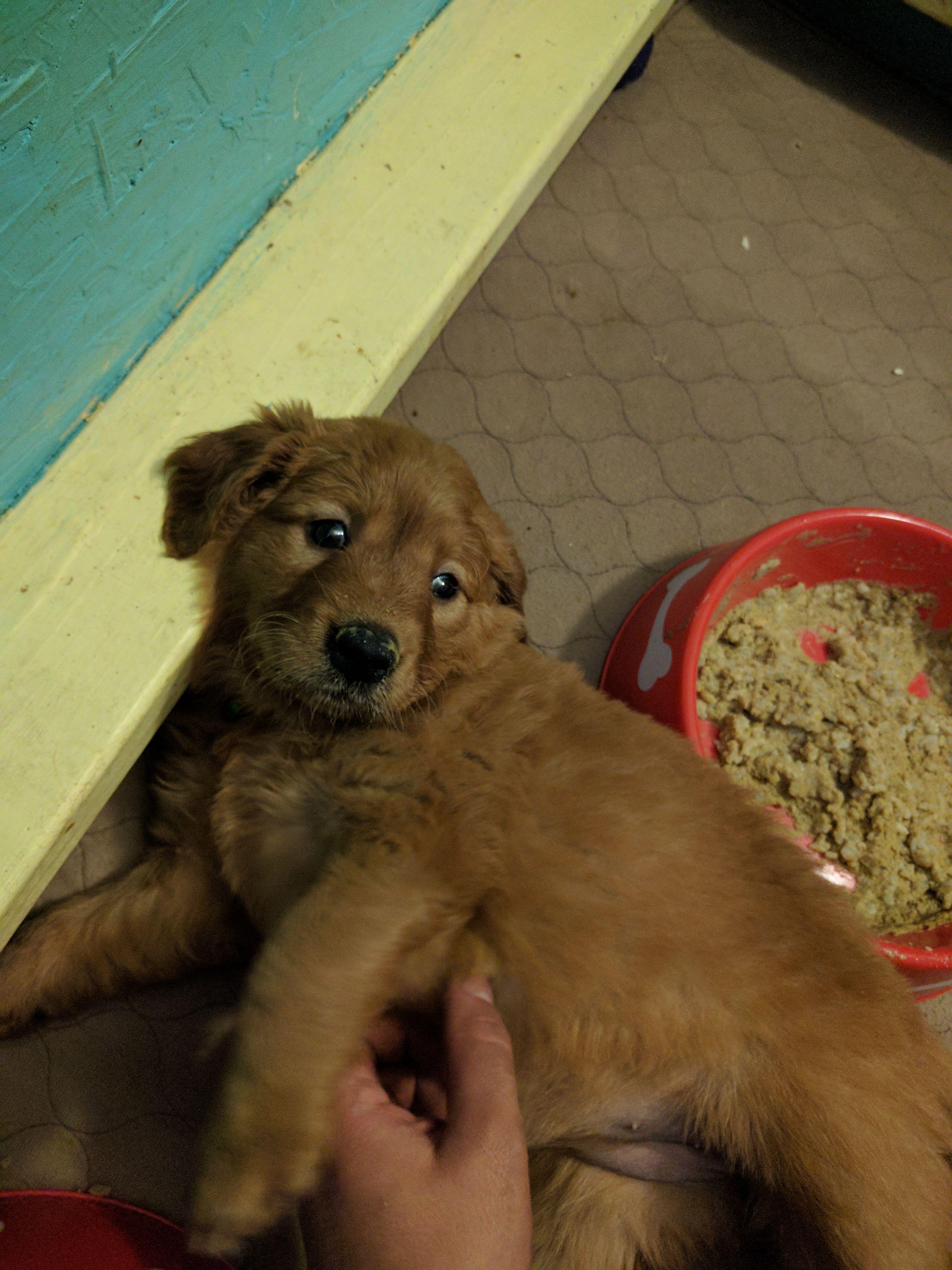 Reddit Meet Adimina X Post R Aww Puppies Dogs Pets Puppy