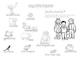 Que Puedo Hacer Hoy Animales Omnivoros Omnivoros Animales Herbivoros Animales Carnivoros