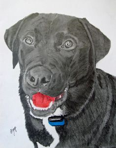 Our dog Riley, drawn by Jim Joye of Spot on Dog Portraits