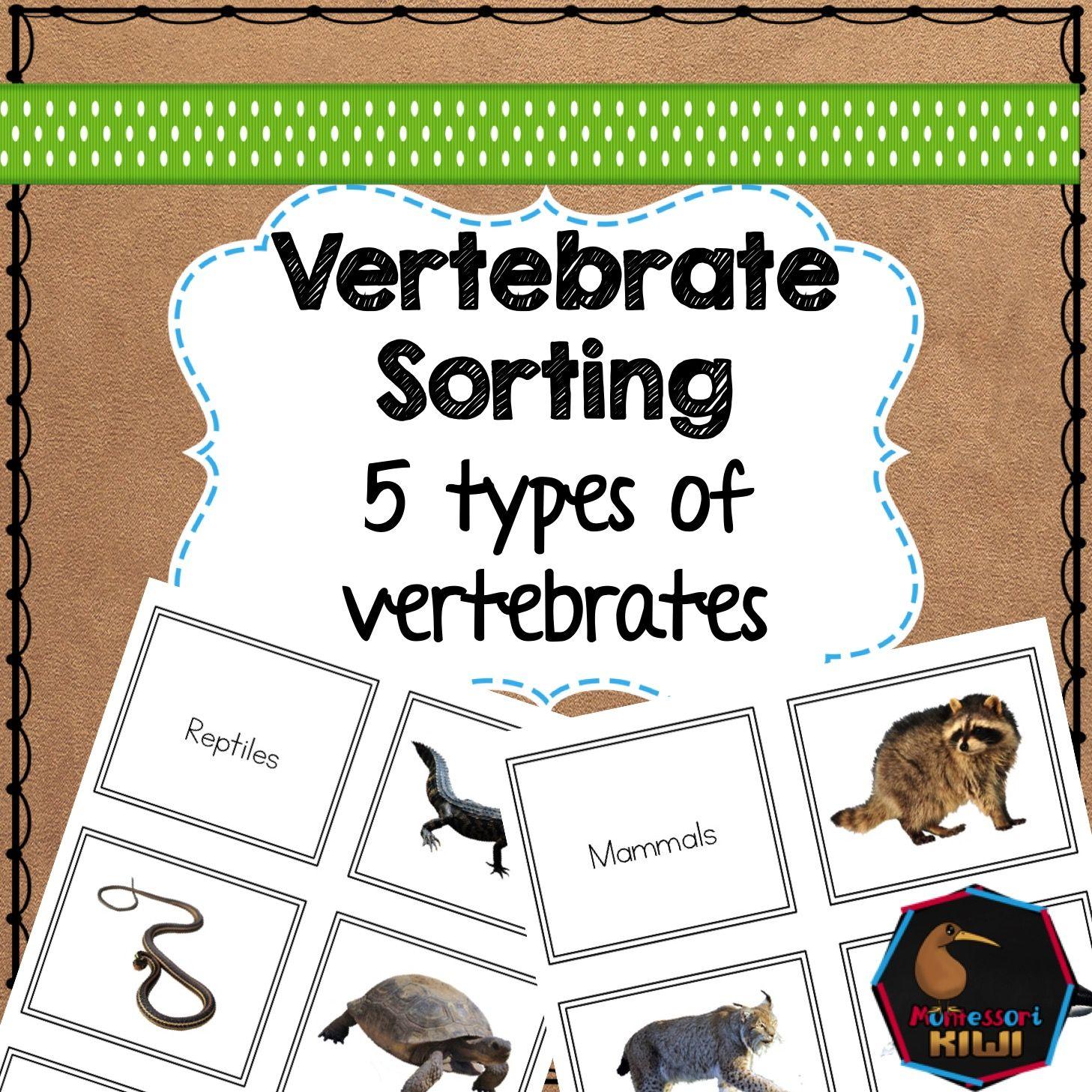 Vertebrate Sorting Activity Types Of Vertebrates Mammals