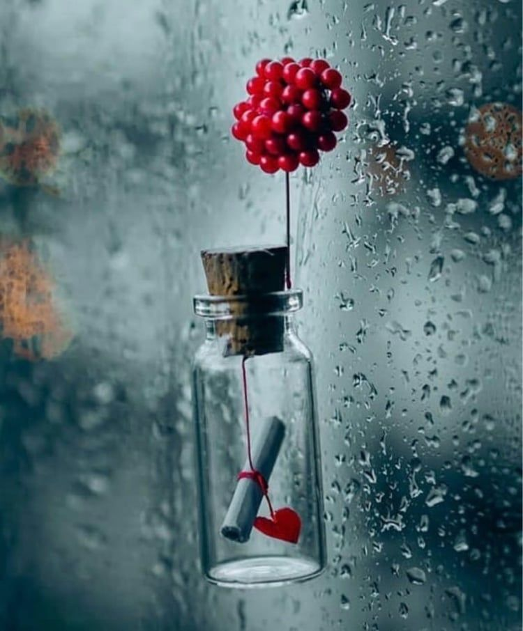 Shared By Princess Rose Find Images And Videos About Love On We Heart It The App To Get Lo Cute Wallpapers Beautiful Nature Wallpaper Miniature Photography Cool love cute photography wallpaper