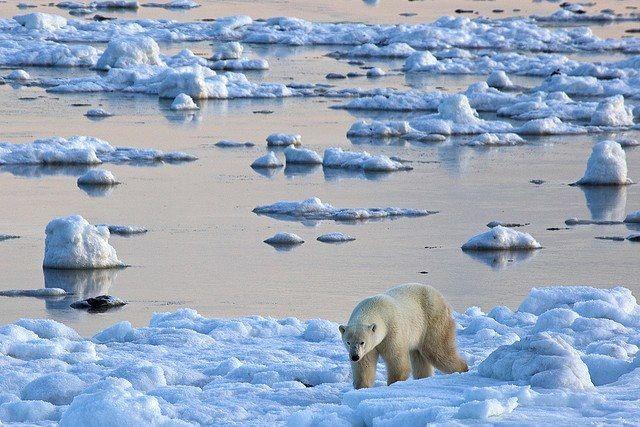 Paseo en el Artico