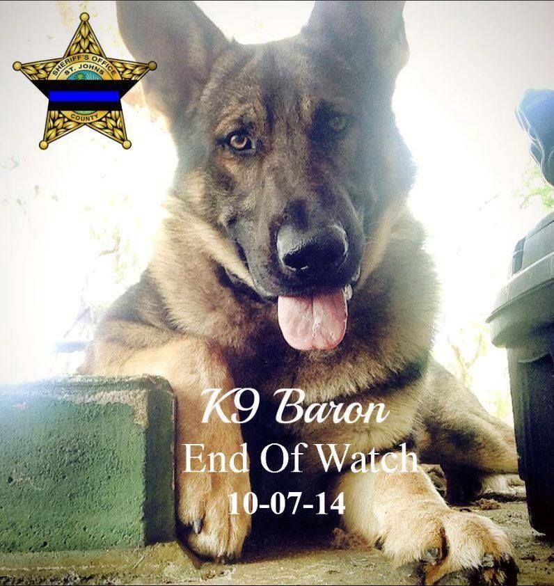End of Watch R.I.P. Baron Military working dogs, Dog