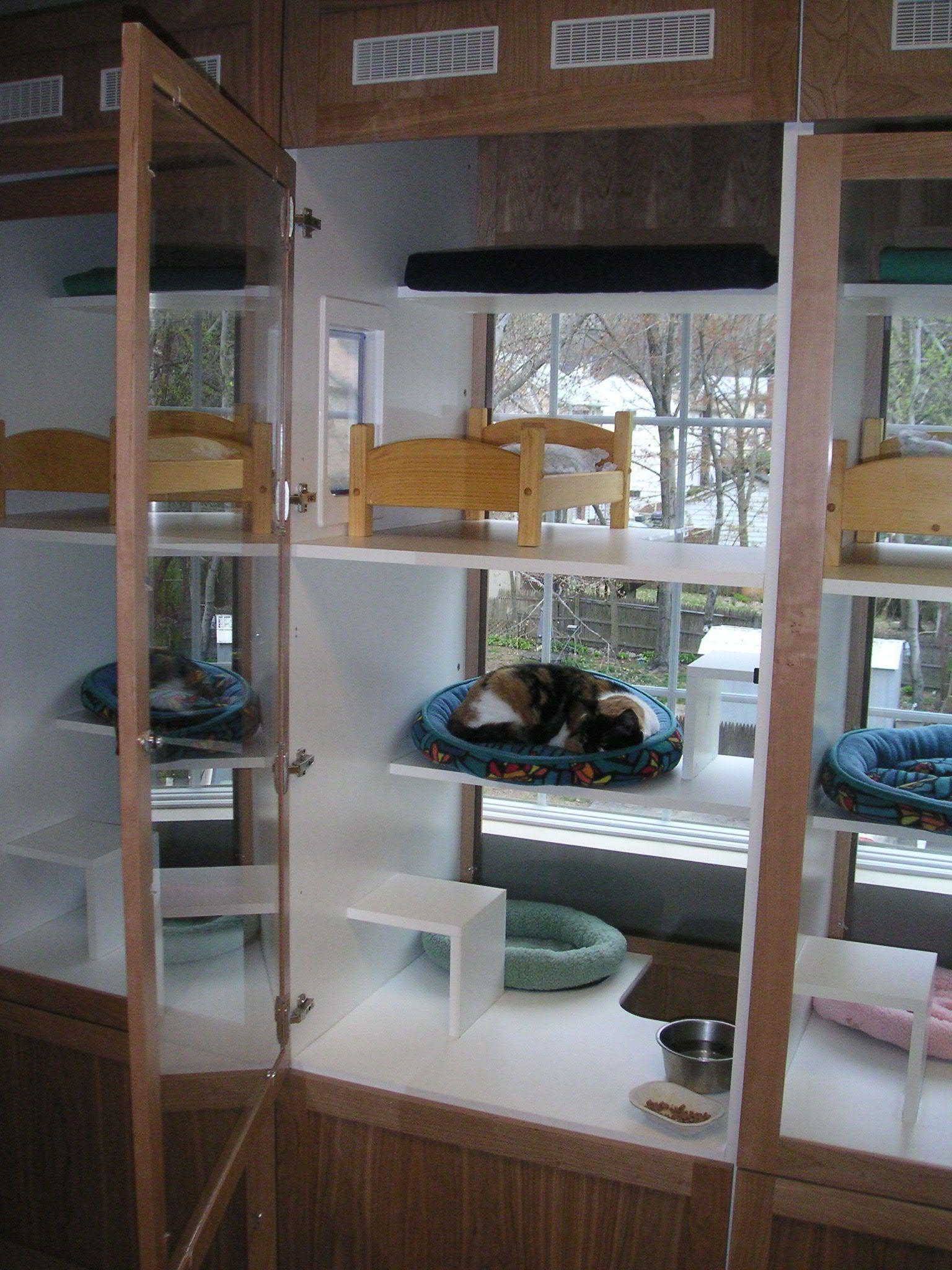 Shelter Cat Condos Cat Room Designs Cat Kennel Cats
