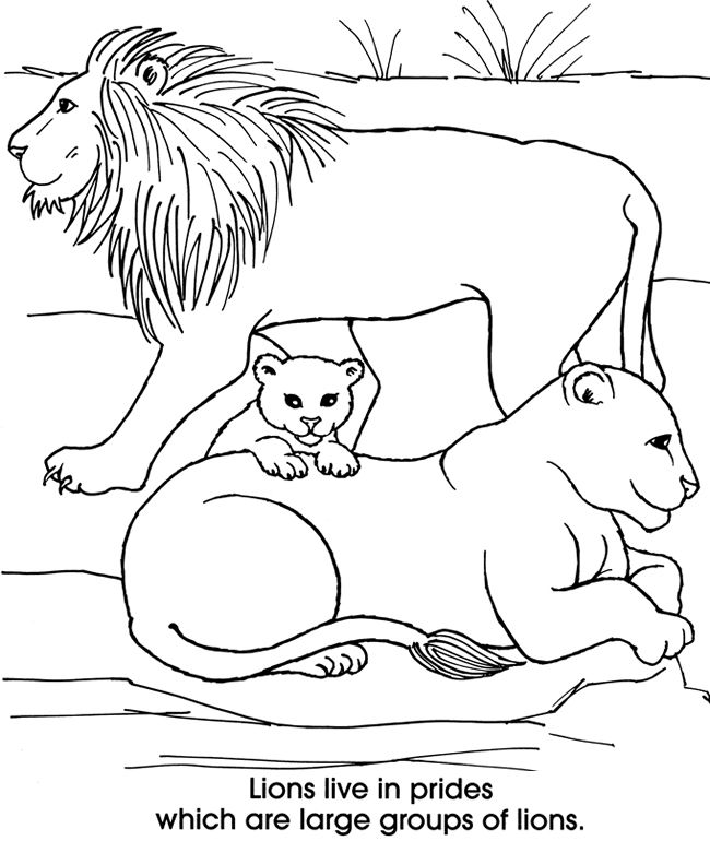 Lion Family Coloring Page Family Coloring Pages Lion Coloring Pages Coloring Pages