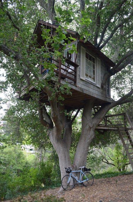 Casas En Los Arboles Por Dentro