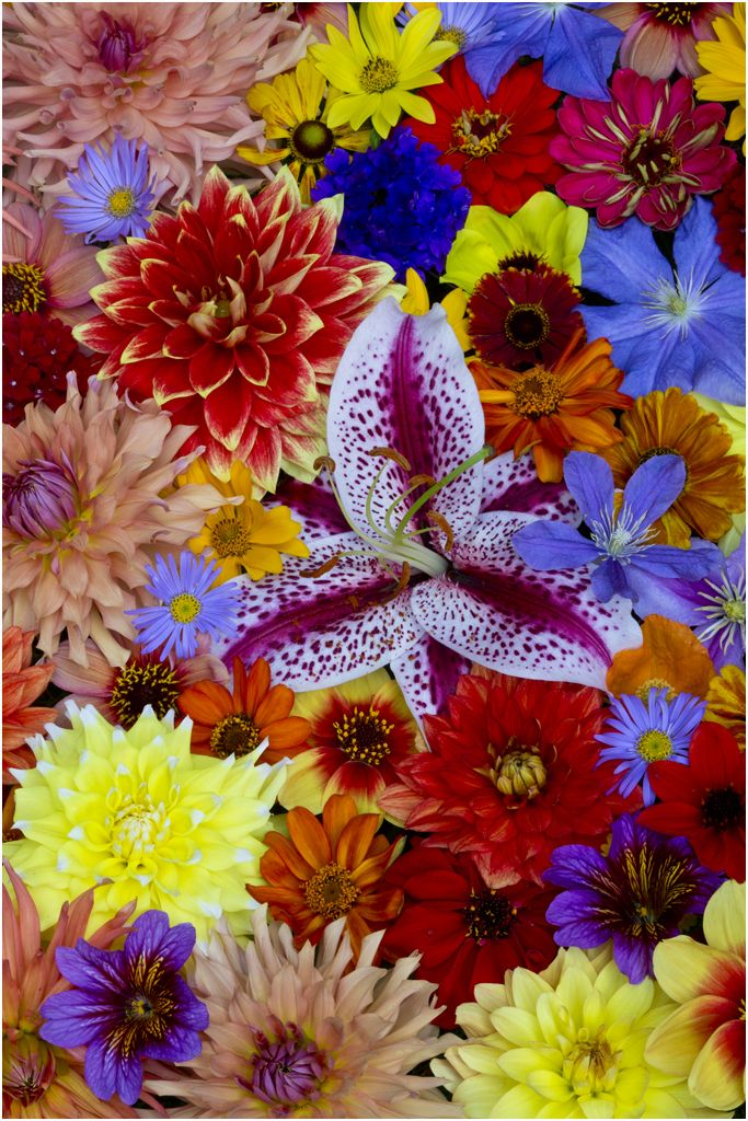 Flower Pattern in bold colors of summer