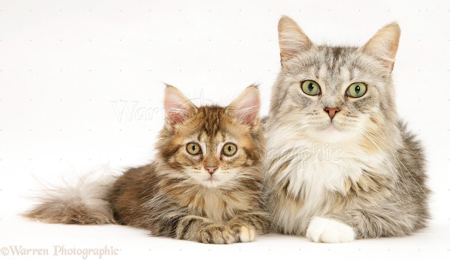 Pin By Linda Walker On Cats Are Purr Fect Kitten Photos Cats And Kittens Cat Pics