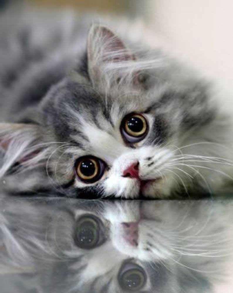 Photo of Amazing Eyes – 21 de septiembre de 2018 – Amamos a los gatos y gatitos