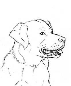 Image Result For Chocolate Lab Sketch Simple Sketches Animal