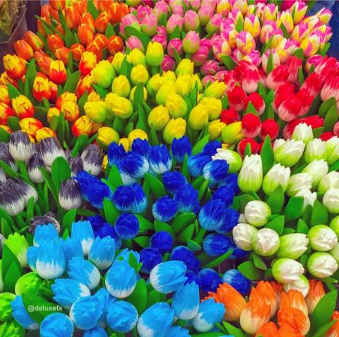 Um mar de tulipas para nos ❤