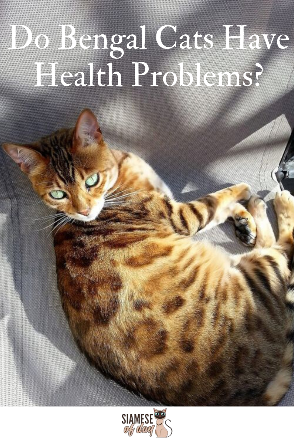 Bengal Cat Characteristics Personality Care Health Information In 2020 Bengal Cat Cat Problems Cats