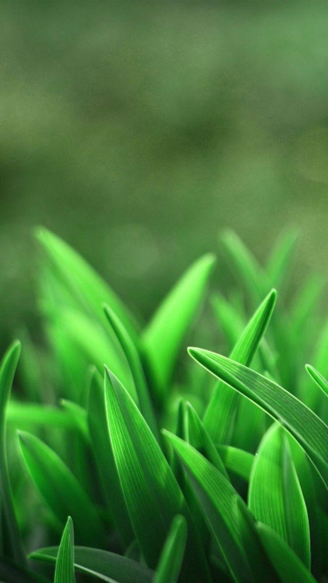 Evergreen Green Wallpaper Green Nature Nature Iphone Wallpaper