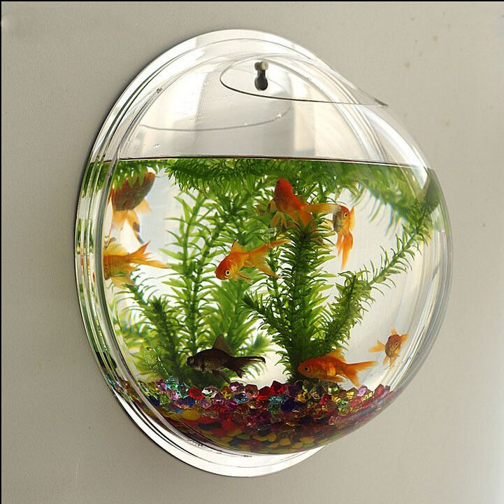 Wall type mini aquarium fish bowl mini aquarium Types of fish aquarium